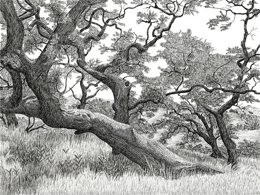 How To Draw A Tree in Landscape - Drawing Techniques - YouTube |Tree Landscape Drawing